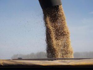 Abiove revisa safra de soja 2019; ainda avalia impactos econômicos para 2020